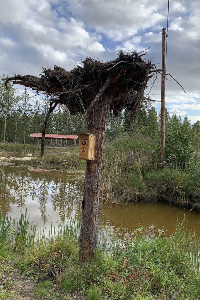 Umgedrehter Baumstumpf mit Vogelhäuschen
