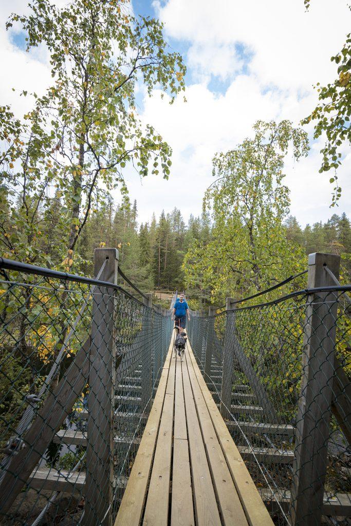 Das Überqueren einer Hängebrücke mit Hunden sollte vorher geübt sein.