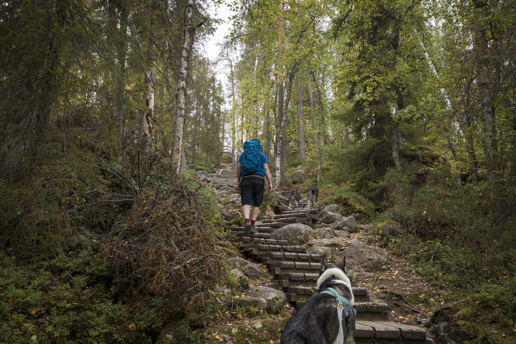 Am Jyrävä-Wasserfall ist die letzte Kondition gefragt, denn hier geht es mal locker 170 Treppenstufen hoch.