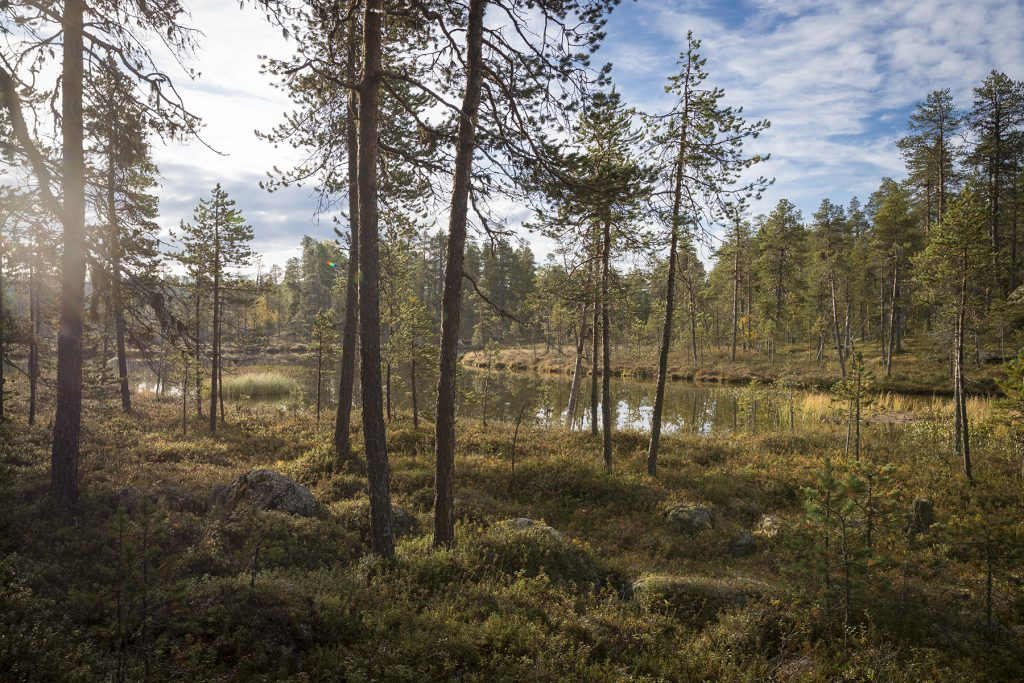 Auf dem Weg nach Pielpajärvi