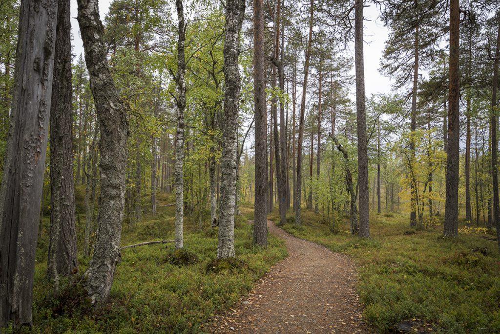 Wanderweg Pyhä