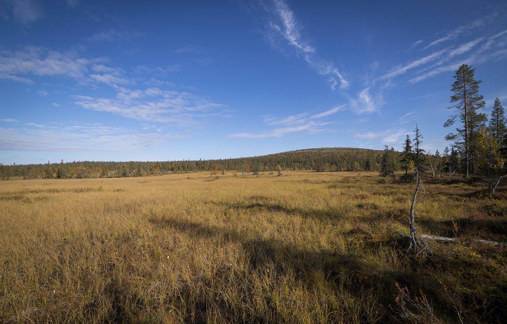 Moorgebiet im Urho-Kekkonen Nationalpark